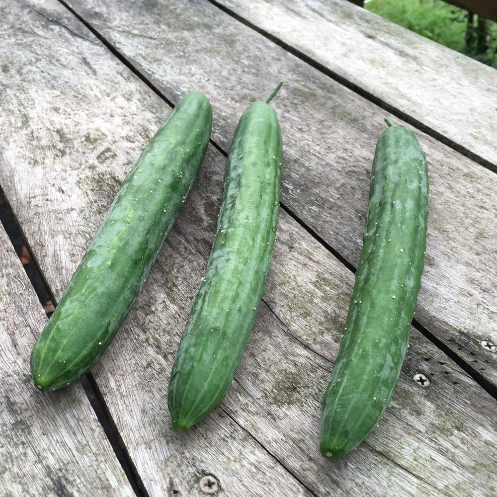 【本週清炒時蔬】有機小黃瓜