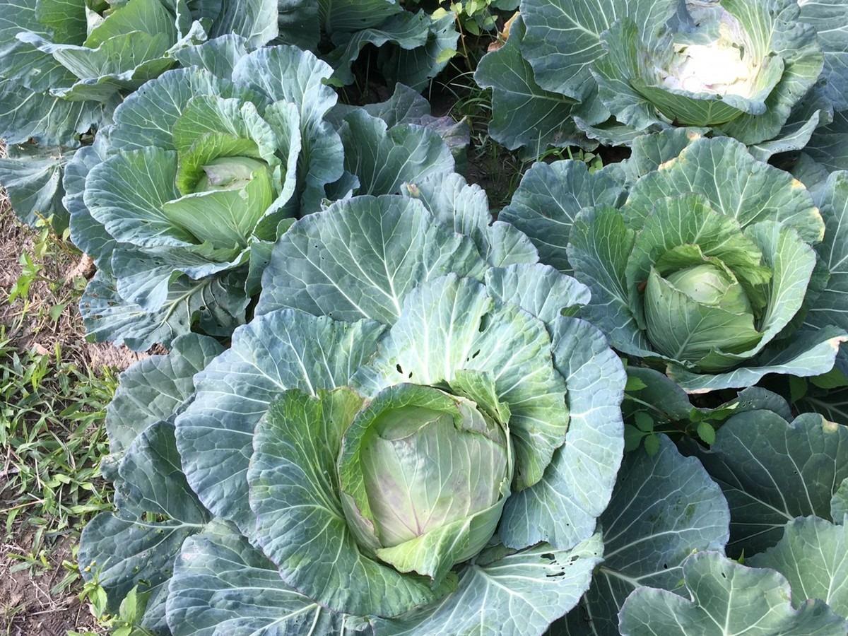 2020-3-18 野菜セット