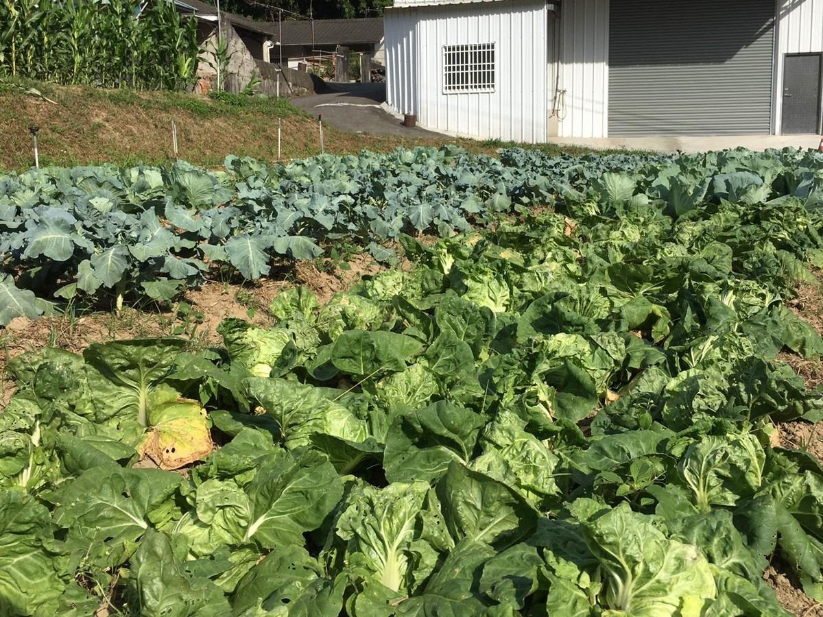 2020-11-4 野菜セット