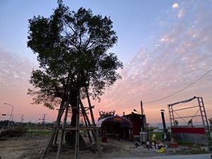 提供侷限空間的樹木根系生長空間- 台中水湳列管老樹移植 Part III
