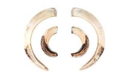 犀角雕件 / 象牙雕件 收購