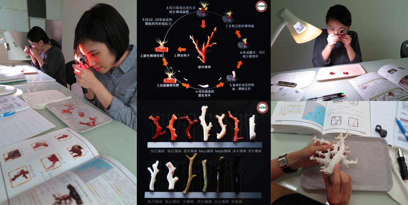 台灣珠寶藝術學院-2018年1月29日珊瑚鑑定培訓認證班