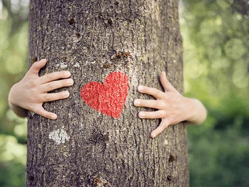 抱樹及接地氣