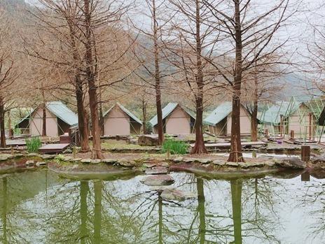 金山豪華露營