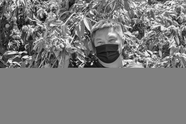 風靡日本的玉荷包荔枝,來自低調的他之手